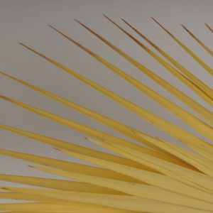 5ft Real Golden Palm Branch